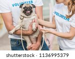 cropped image of two volunteers ... | Shutterstock . vector #1136995379
