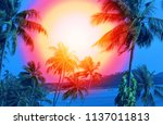 photo of bright tropical... | Shutterstock . vector #1137011813