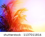 photo of bright tropical... | Shutterstock . vector #1137011816