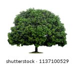 Big Tree At Isolated On White...