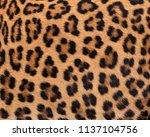 leopard fur texture  real fur  | Shutterstock . vector #1137104756