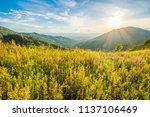the mountains in the afternoon  ... | Shutterstock . vector #1137106469