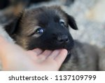 Small photo of Sweet rescue dog puppy nibble my hand while watching in my eyes in south Italy.