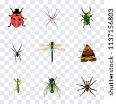 Set Of Insect Realistic Symbol...
