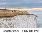 panoramic photo of white cliffs ... | Shutterstock . vector #1137181190