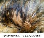 fur animal fur with long nap...   Shutterstock . vector #1137230456