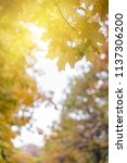 soft autumn background with... | Shutterstock . vector #1137306200
