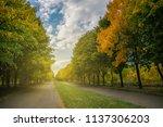 landscape with beautiful autumn ... | Shutterstock . vector #1137306203