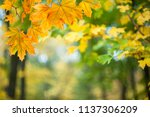 soft autumn background with... | Shutterstock . vector #1137306209