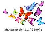 beautiful color butterflies set ...   Shutterstock . vector #1137328976