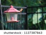 vintage lantern style bird... | Shutterstock . vector #1137387863