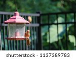 young northern cardinal... | Shutterstock . vector #1137389783