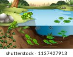 scene of frogs in a pond... | Shutterstock .eps vector #1137427913