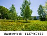 beautiful landscape the green... | Shutterstock . vector #1137467636