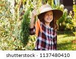happy farmer child girl picking ... | Shutterstock . vector #1137480410
