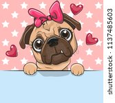 greeting card cute cartoon pug... | Shutterstock .eps vector #1137485603