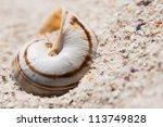 Постер, плакат: A shell with a