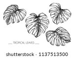 collection set of tropical leaf ... | Shutterstock .eps vector #1137513500