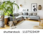 plant next to grey corner sofa... | Shutterstock . vector #1137523439