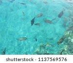 beautiful sea  fish. | Shutterstock . vector #1137569576