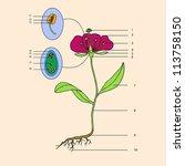 botanic  educational... | Shutterstock .eps vector #113758150