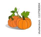 hand sketched autumn orange... | Shutterstock .eps vector #1137583004
