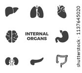 internal organs icons set.... | Shutterstock . vector #1137645020
