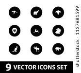 mammal icon. collection of 9... | Shutterstock .eps vector #1137681599