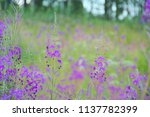 A Meadow Covered In Purple...