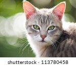 Stock photo cat looking at camera 113780458