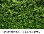 green leaves wall texture... | Shutterstock . vector #1137831959