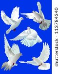 Doves Collection