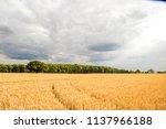a relaxing and beautiful summer ...   Shutterstock . vector #1137966188