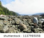epic hike along the west coast... | Shutterstock . vector #1137985058