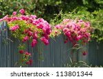 Stock photo pink roses climbing on the wooden fence 113801344