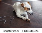 dog chewed the wires. naughty... | Shutterstock . vector #1138038023