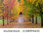 Fall Colors Of Maple Tree Lined ...