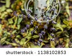 cup of tea lavender provence... | Shutterstock . vector #1138102853