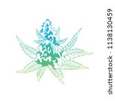 Cannabis Bud Flower.cannabis...