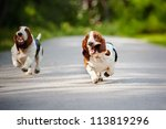 Stock photo cute funny dogs basset hound running on the road 113819296