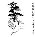 nifty gentle hand drawn... | Shutterstock .eps vector #1138193123