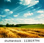 Summer Landscape With Wheat...