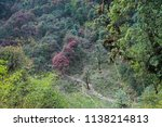 rocky steps in the forest with... | Shutterstock . vector #1138214813