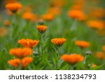 bright summer background with... | Shutterstock . vector #1138234793