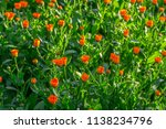 bright summer background with... | Shutterstock . vector #1138234796