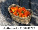 marigold  calendula officinalis  | Shutterstock . vector #1138234799