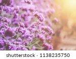 Blurred Of Verbena Bonariensis...