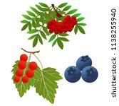 rowan berries  blueberries and...   Shutterstock .eps vector #1138255940
