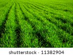 lawn backgrounds | Shutterstock . vector #11382904