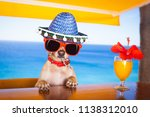 funny cool chihuahua dog... | Shutterstock . vector #1138312010